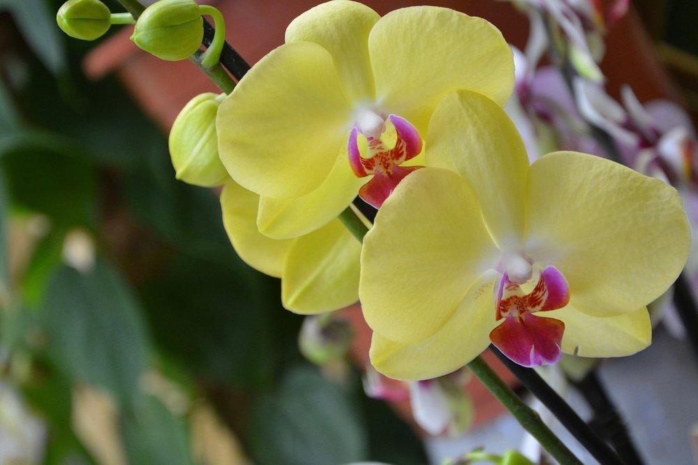 flower-2983797_1920.jpg