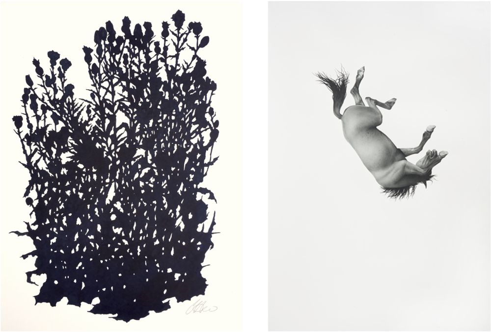 Left: Clare Doveton, Tall Thistle, Matfield Station 2, ink on paper, 30 x 22.5  Right: Larassa Kabel, The Tremor of Dusk, colored pencil and artist's tears on paper, 34 x 23  Prices upon request