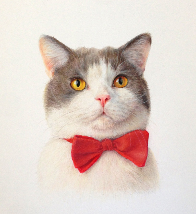 Cat with a bow tie 9x12 Colored Pencils