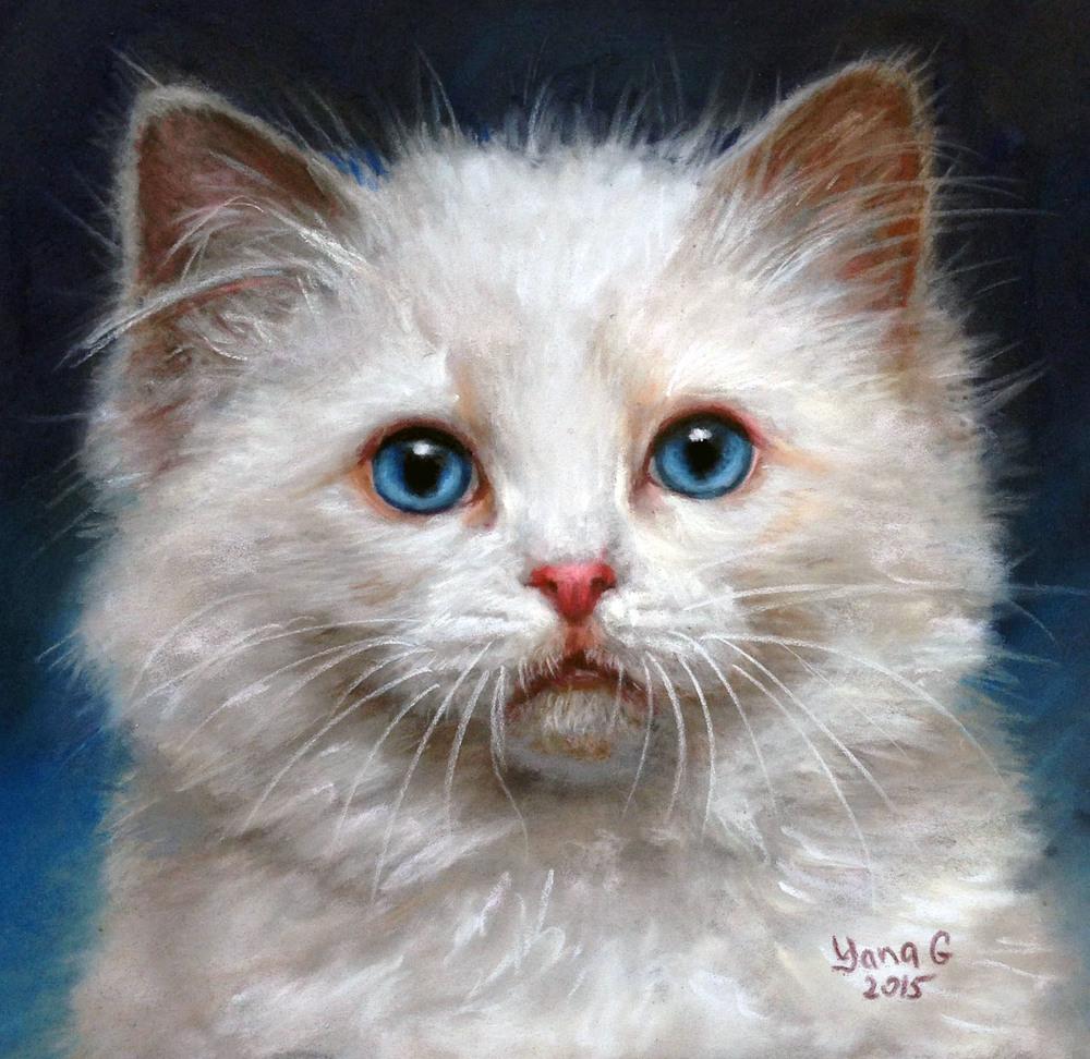 White Kitten 8x8 Pastel