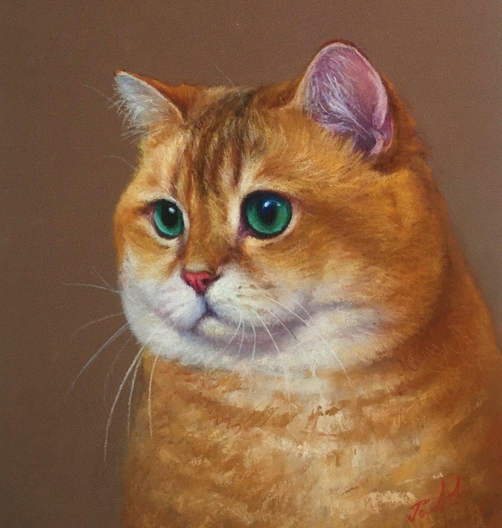 Hosico cat. 8x10 Pastel