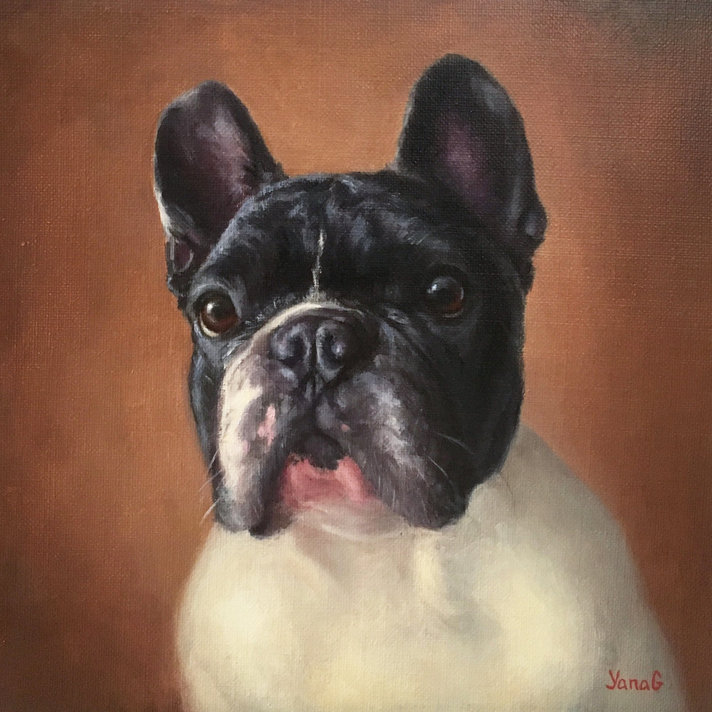 Zorro 10x10 Oil on linen
