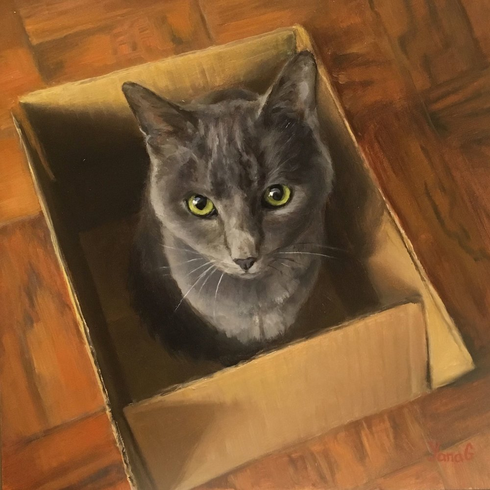 Cat in The Box 8x8 Oil on board