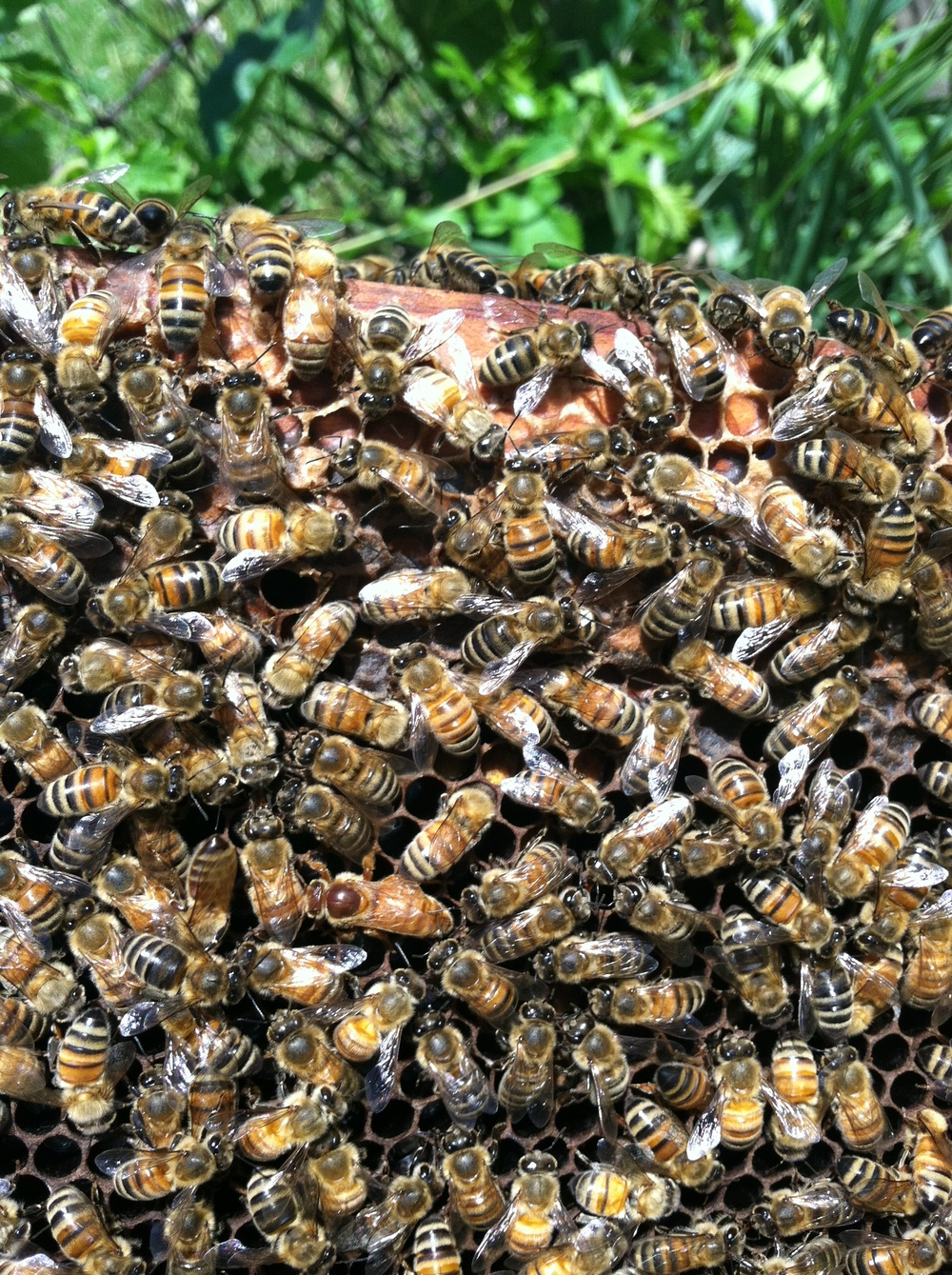 Find the queen, if you can!