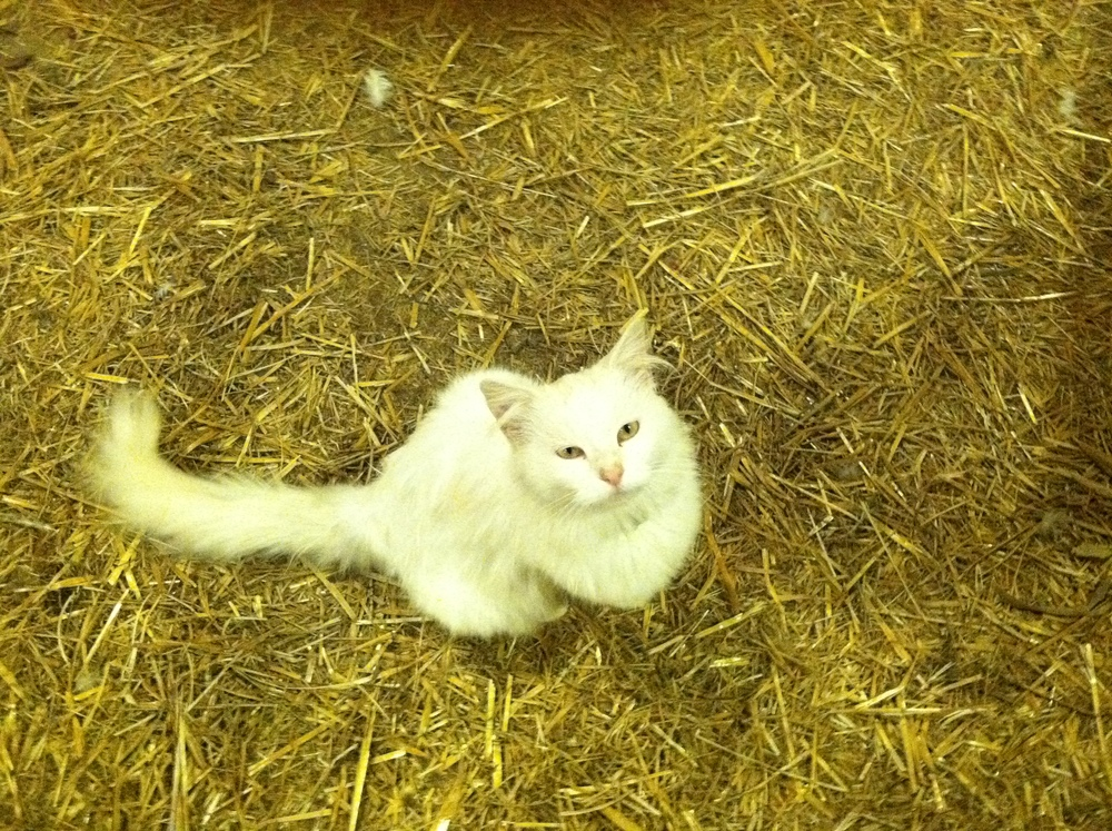 This is Misty. She's our spoiled rotten barn cat.