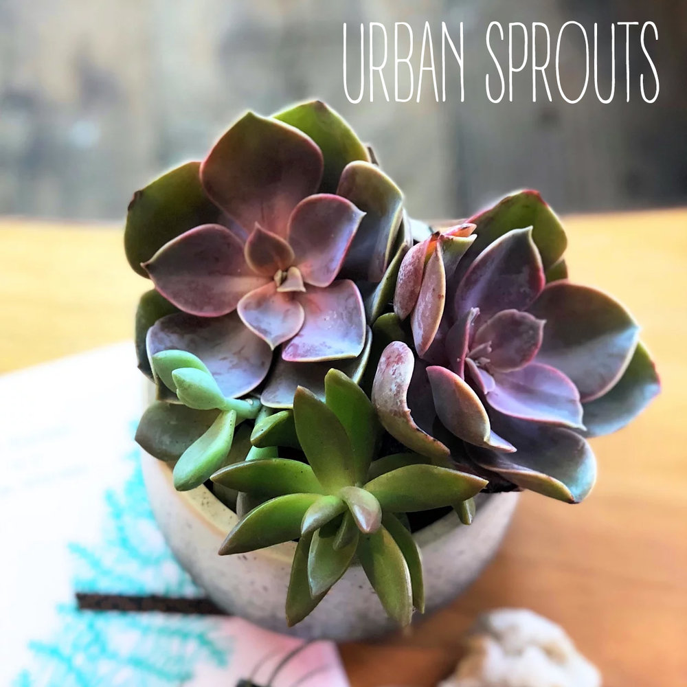 urbansprouts page.jpg
