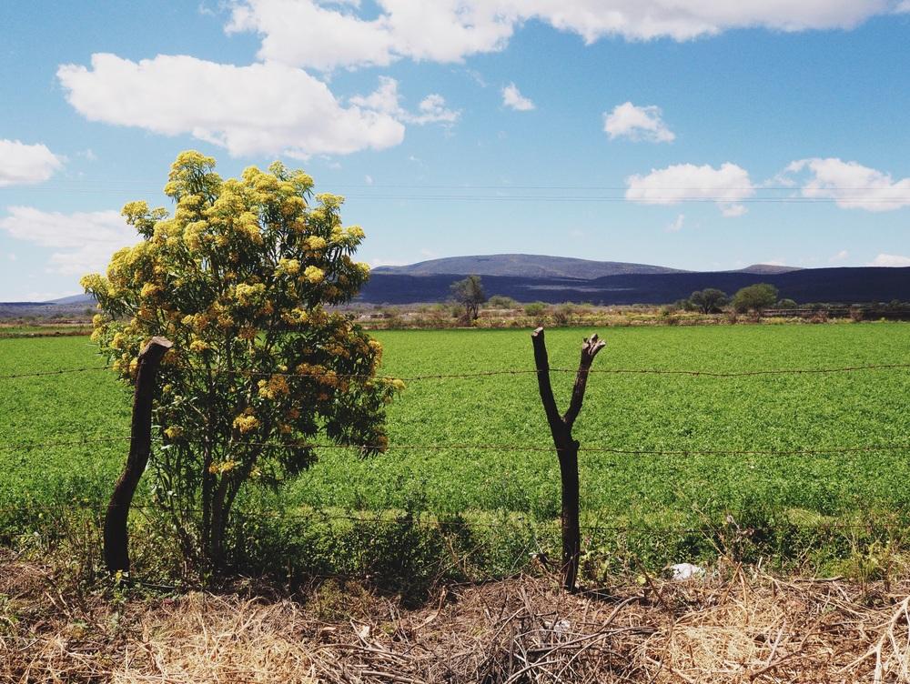 Fields upon fields upon fields...