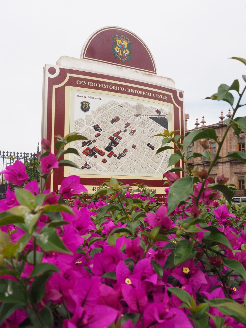 Blooming bougainvilla & a map of the Centro