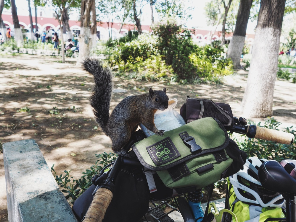 Friendly squirrel in Cholula checking Mehedi's bike for snacks