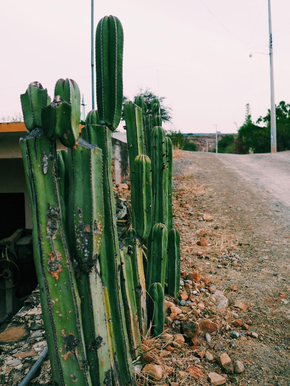 Loving these cacti!