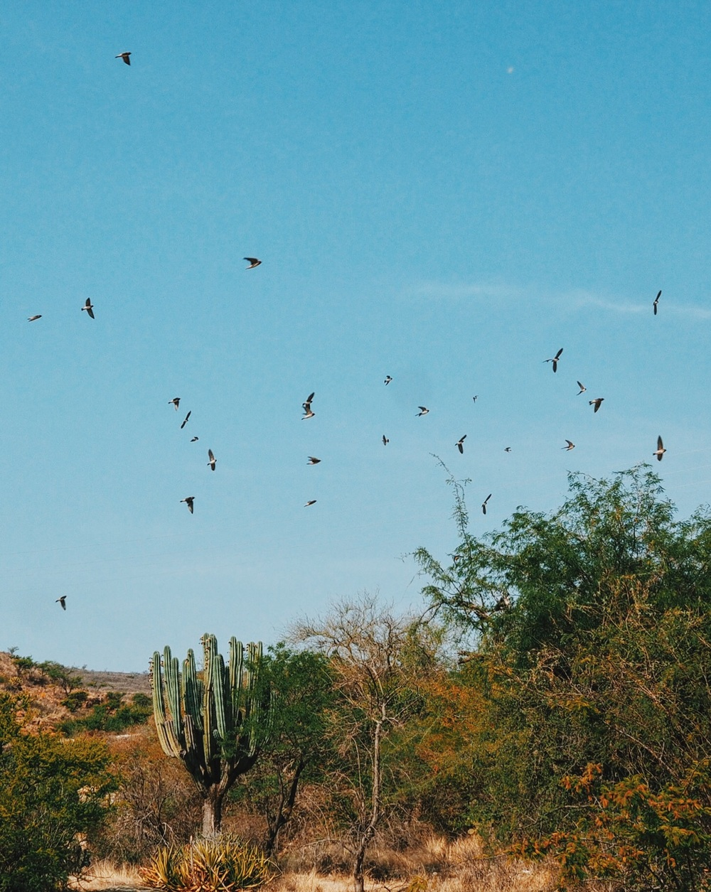 Birds & cacti in southern Puebla