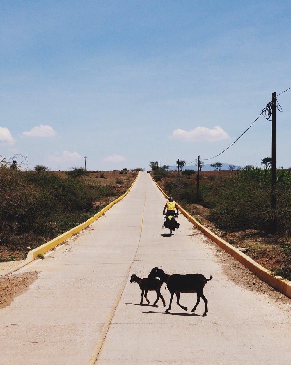 """La """"Pe"""" goat crossing"""