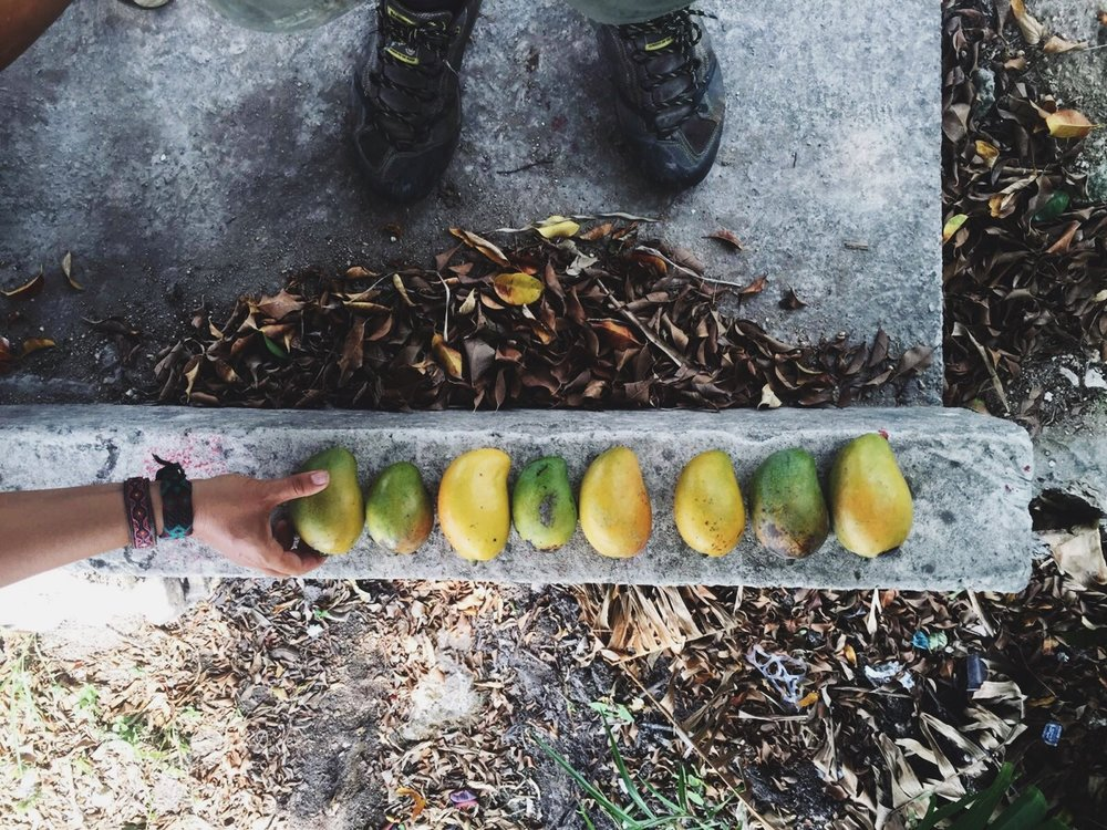 Roadside mango finds