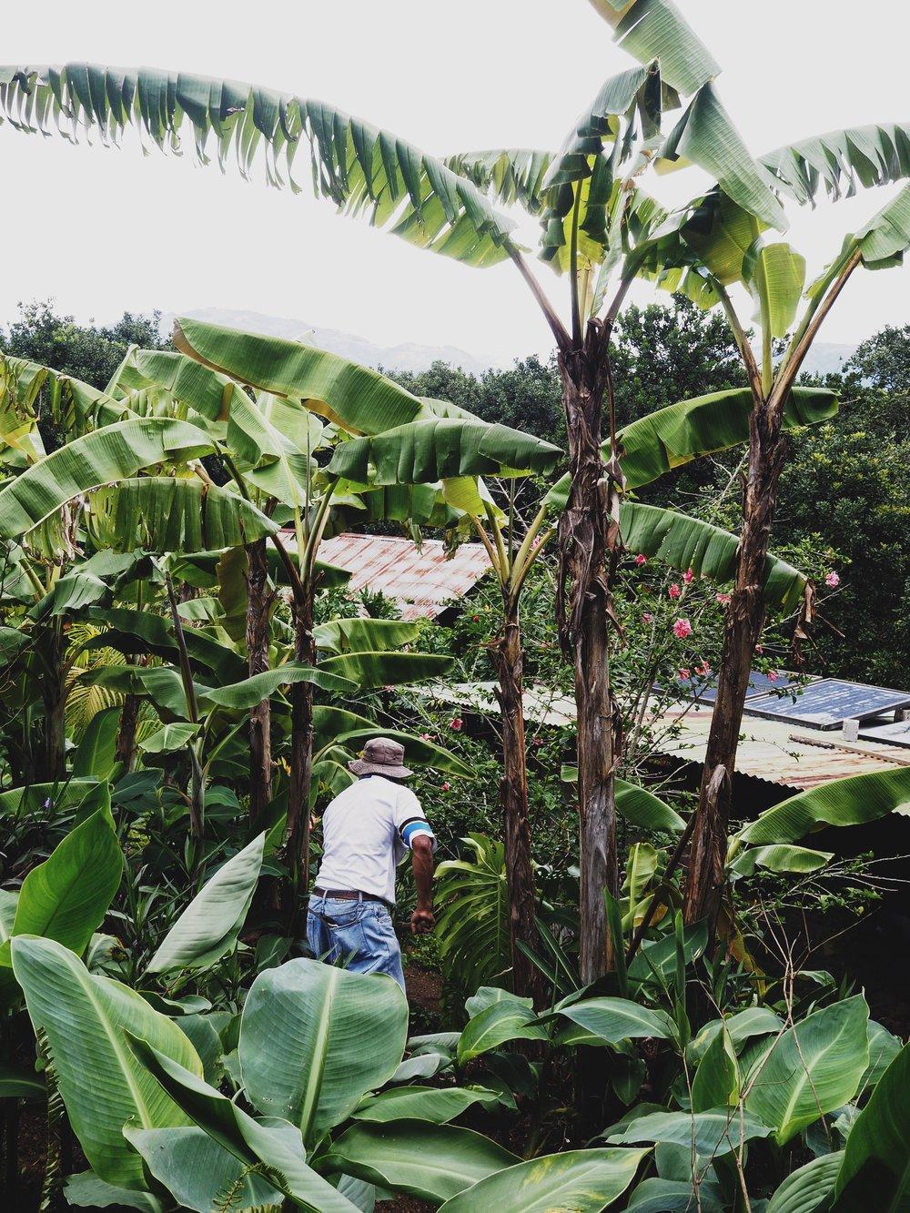 Valhalla Farm