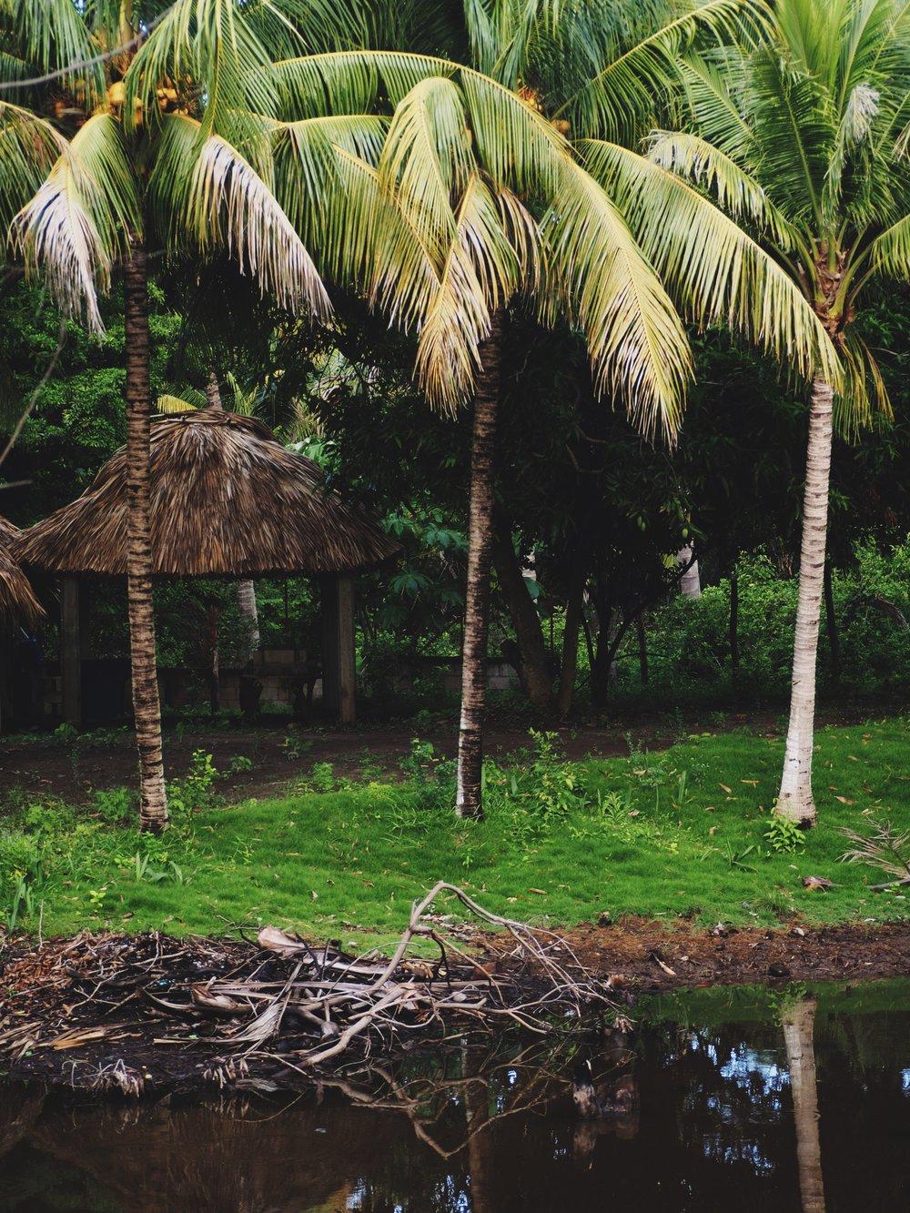 Gorgeous swampy wet lands along Guatemala's coast