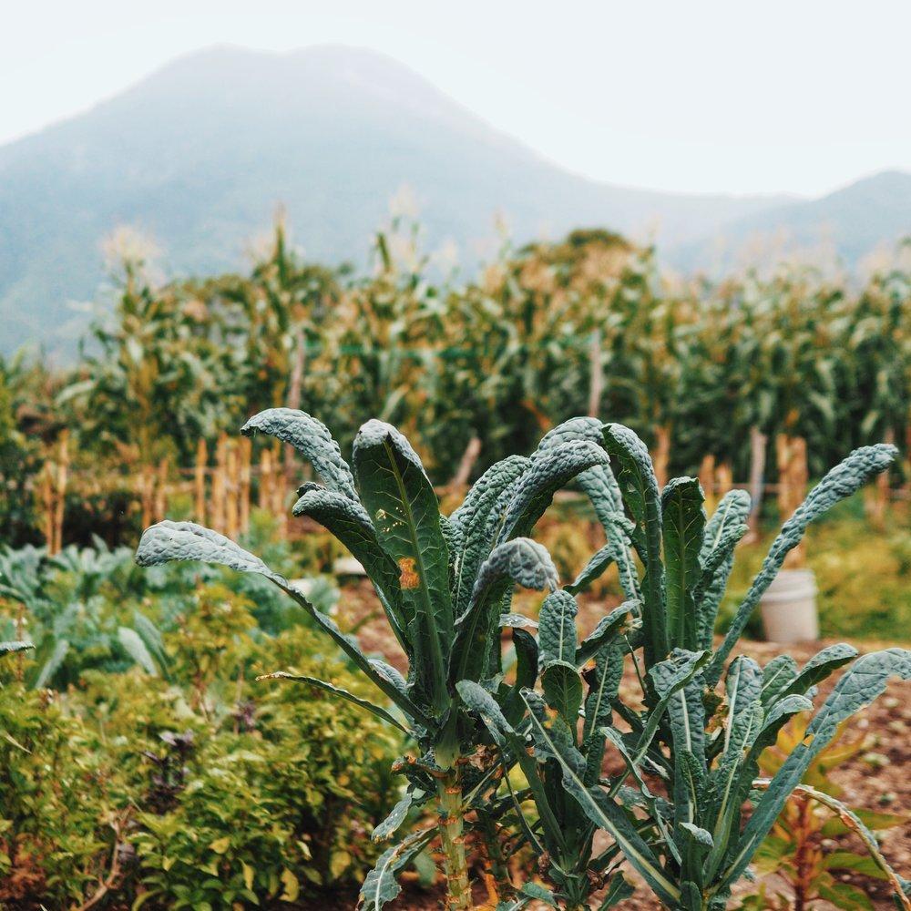 Organic farm in San Pedro
