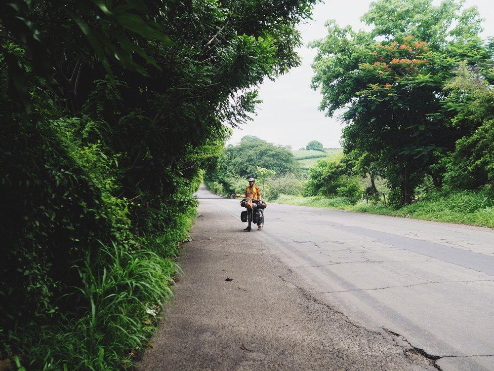 Mango trees on the highway
