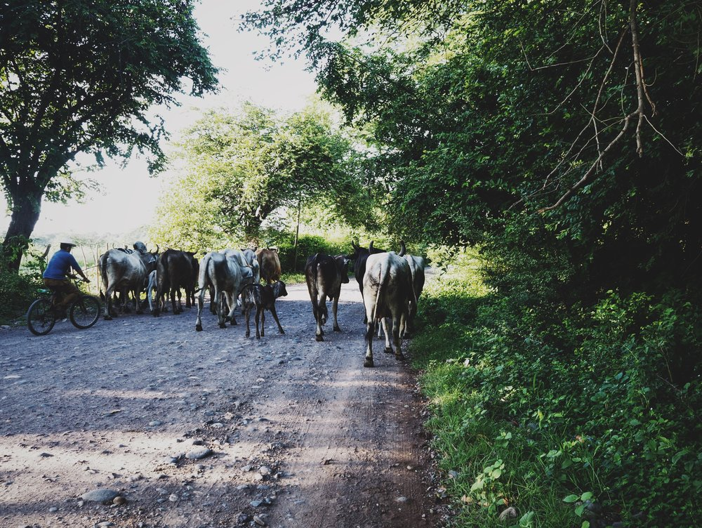 Morning rush hour traffic