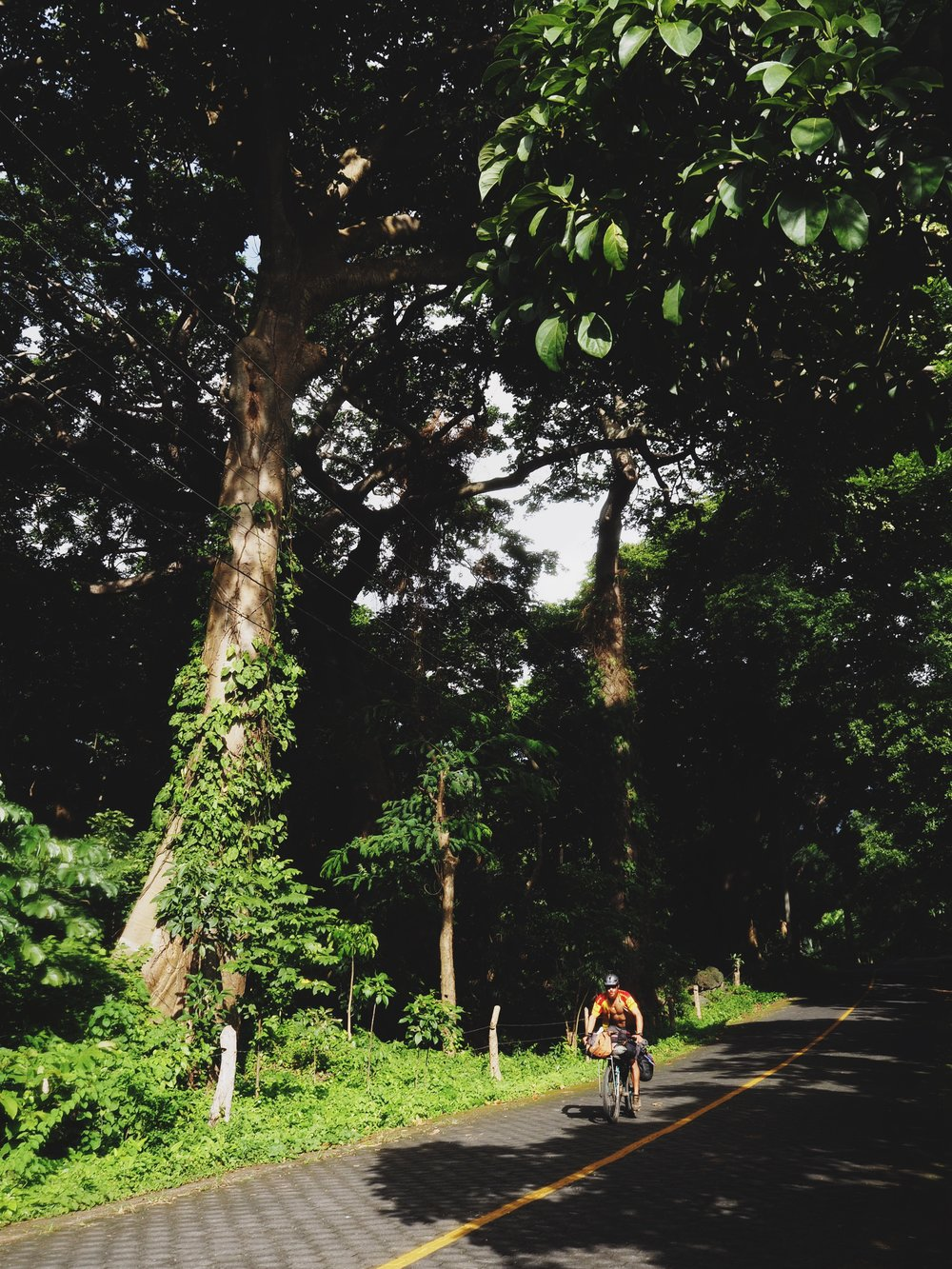 Enormous trees dotted the road along our figure 8 around Ometepe