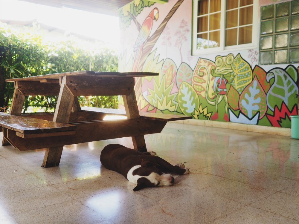 Hostel pup takes a snooze in the morning heat