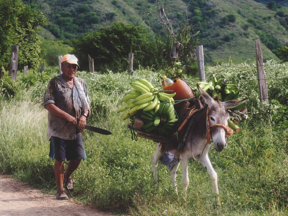 Farmer and his platano-loaded up donkey