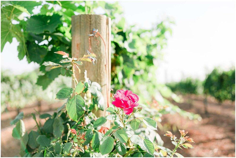 darianshantayphotography_hazeljr_vineyards_0003.jpg