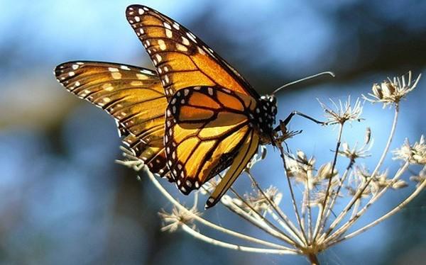 butterfly5.jpg