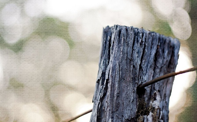 fence-post-photo-by-ngaire-naran.jpg