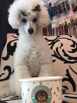 dog eating ice cream hugos ice creamery