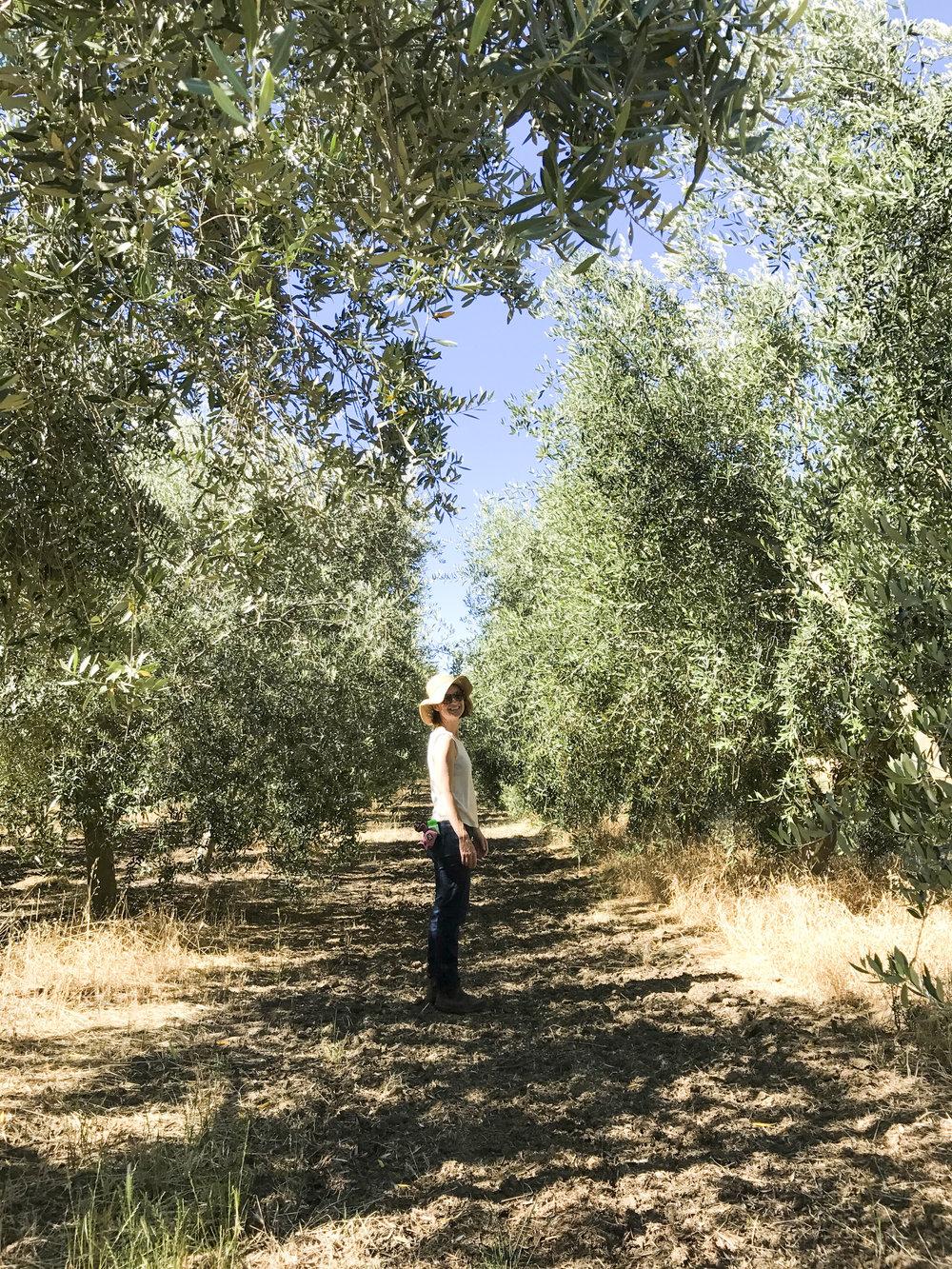 flatlands olive oil_24.JPG