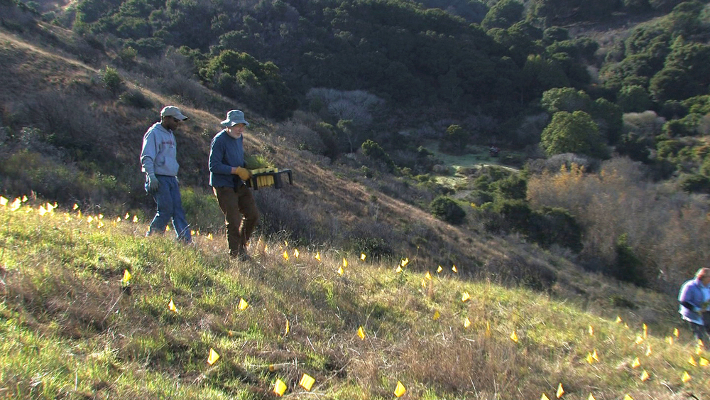 San Bruno Mountain Ecosystem Restoration