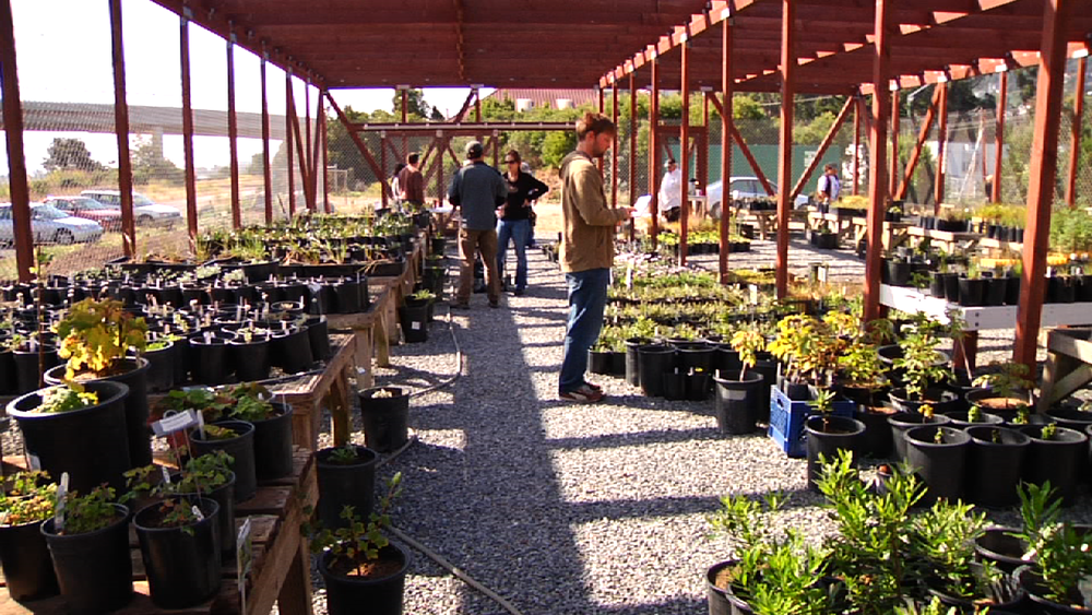 A public plant sale at the Mission Blue Nursery.