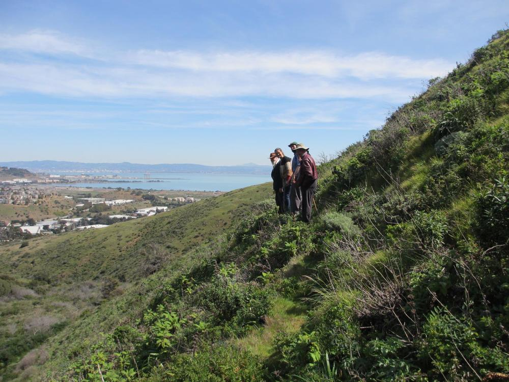 Hiking on San Bruno Mountain