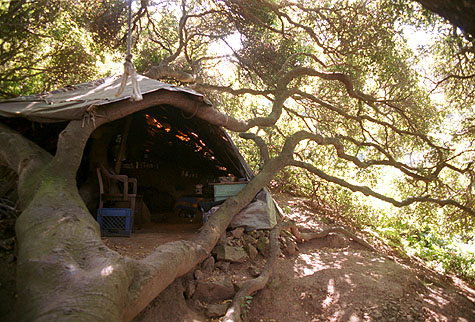 Besh and Thelma's home on San Bruno Mountain