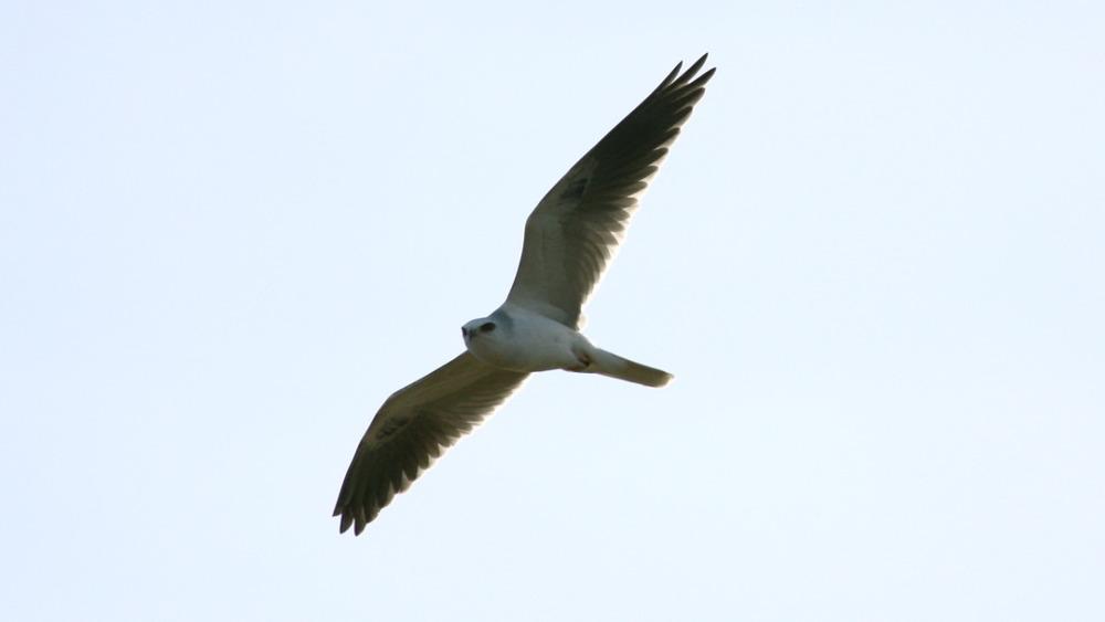 kiteflight.jpg