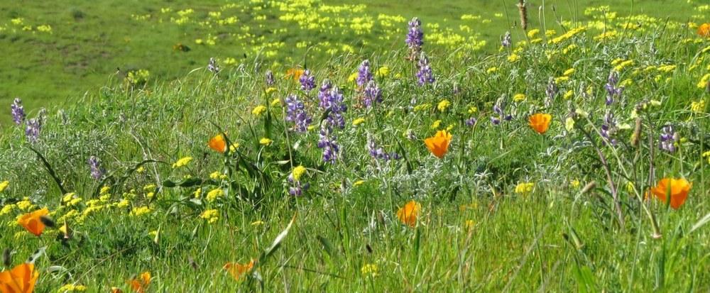 SouthSlope_garden_agIMG6052_1500.jpg