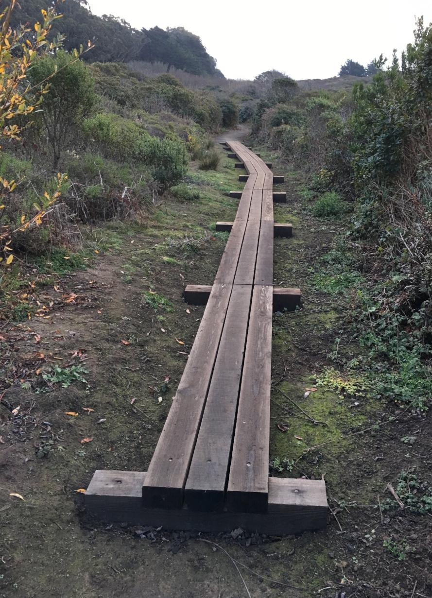"The ""Redwood Highway"""