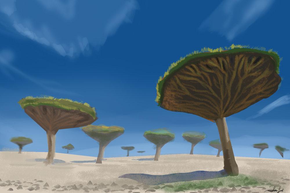 Day70_Yemensocotrai island.jpg