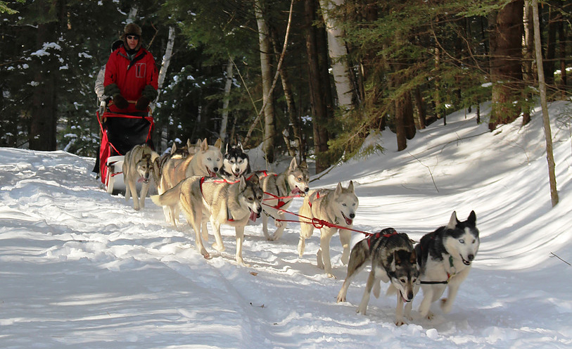 Photo Credit: October Siberians Sled Dog Adventures