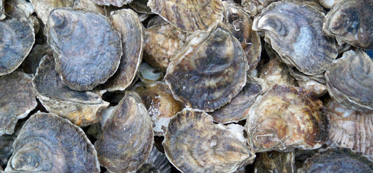 Photo Credit:Signature Oysters