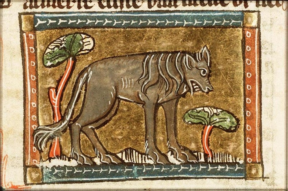 An illustration of a hyena that is not eating a human corpse (they almost always are eating dead people in medieval bestiaries). The bestiary is Jacob van Maerlant,   Der Naturen Bloeme .  It's in ms. The Hague, KB, KA 16, f. 59v. (C)  Koninklijke Bibliotheek National Library of the Netherlands.