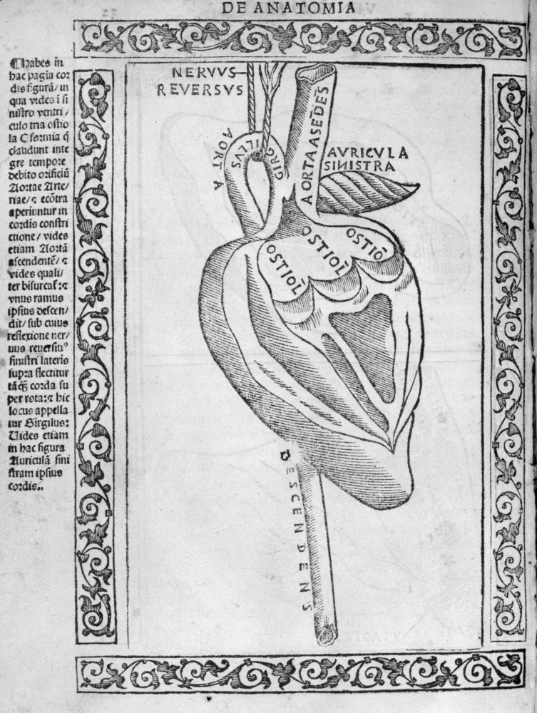 1523 woodcut depicting the heart. In Berengario's  Isagogae breves perlucidae ac uberrimae in anatomiam humani corporis,  f. 32v.  Image over here at BIU Santé.