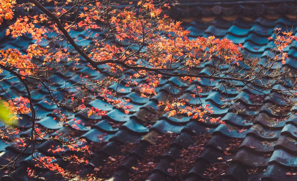 Arashiyama (35 of 55).jpg