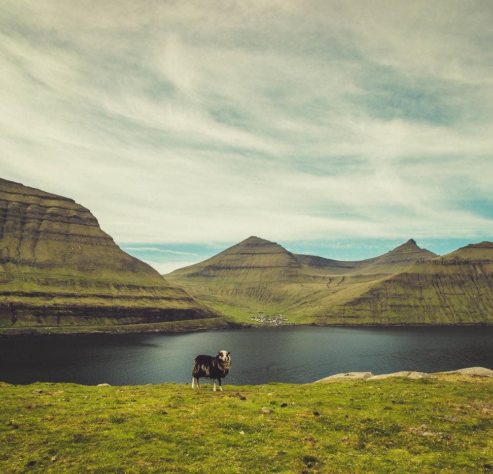 Faroe (21 of 27).jpg