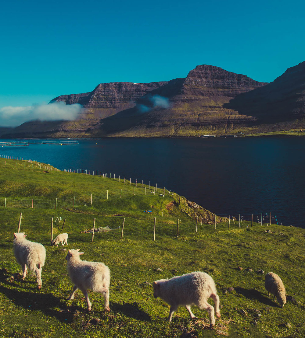 Faroe (5 of 15).jpg