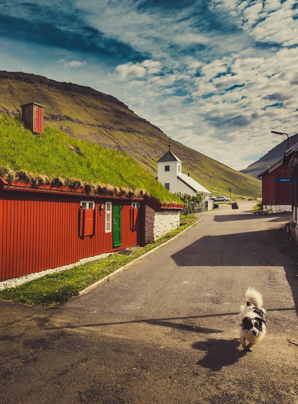 Elduvik Local Dog, Faroe Islands