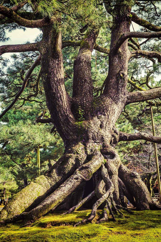 Kenroukuen Garden