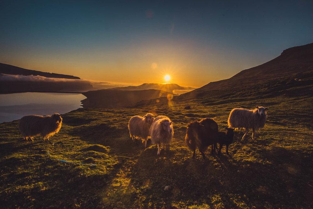 Faroe Islands in June