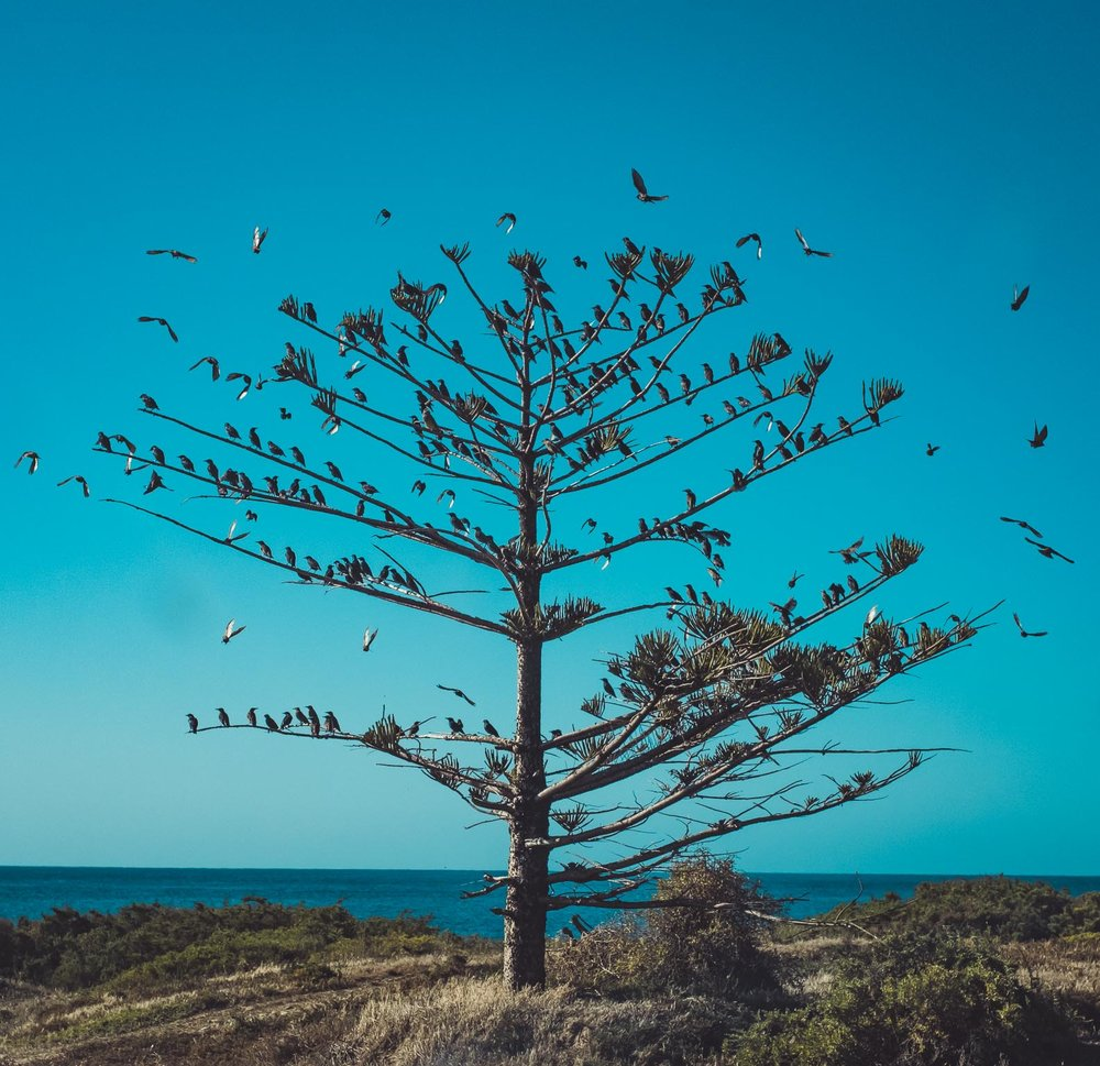 Birds at Cape Jarvis