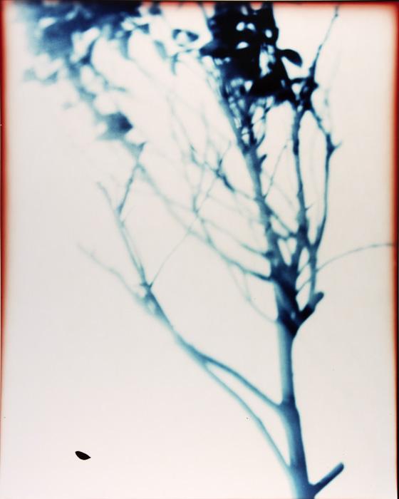 Branch_Positive1.jpg